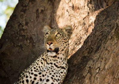 30 - Upepo Safari - Animals