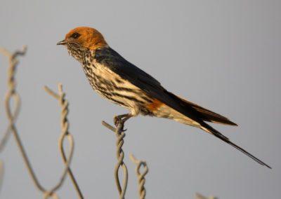 31 - Upepo Safari - Birds