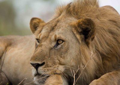 32 - Upepo Safari - Animals