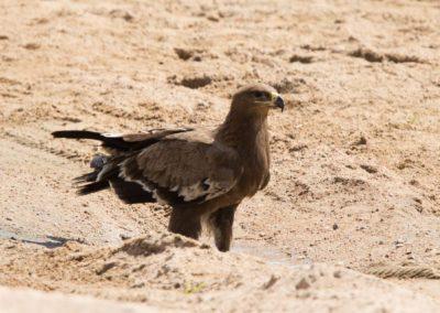 32 - Upepo Safari - Birds