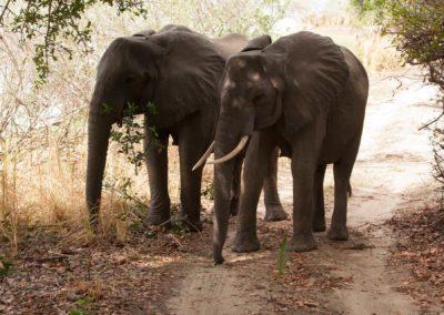 34 - Upepo Safari - Animals