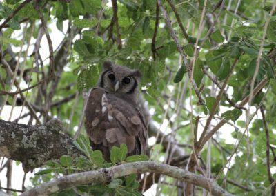 34 - Upepo Safari - Birds