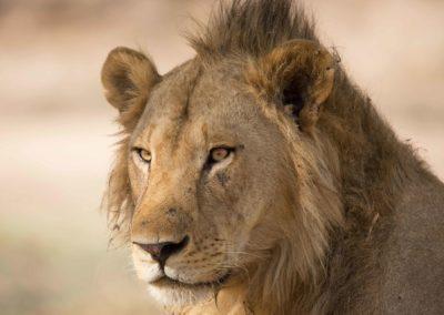 35 - Upepo Safari - Animals