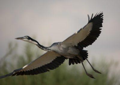 35 - Upepo Safari - Birds