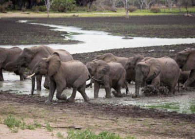 36 - Upepo Safari - Animals