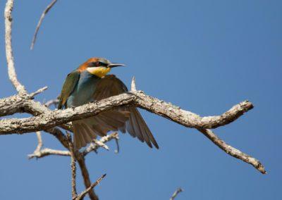 37 - Upepo Safari - Birds