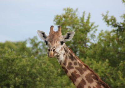 38 - Upepo Safari - Animals