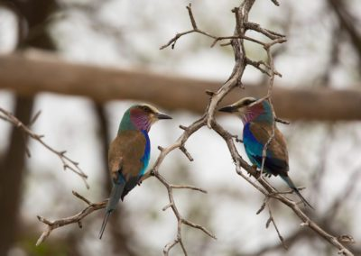 38 - Upepo Safari - Birds