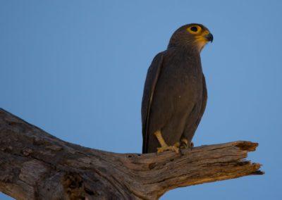 39 - Upepo Safari - Birds