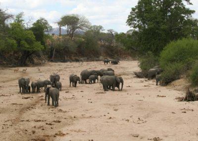 40 - Upepo Safari - Animals