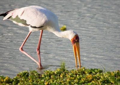 40 - Upepo Safari - Birds