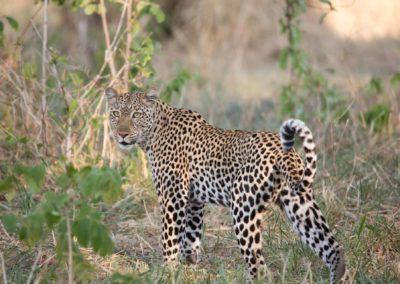 41 - Upepo Safari - Animals