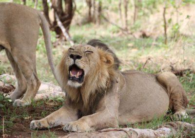 43 - Upepo Safari - Animals
