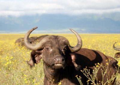 44 - Upepo Safari - Animals